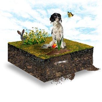 Mini World, Dog, Bone, Meadow, Flowers, Rabbit