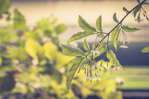 Flowers, Plant, Dew, Wet, Dewdrops, Raindrops, Bloom
