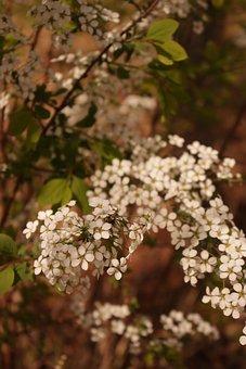 Spring, Flower, Blossom, Bloom, Beauty, Essence, Plant