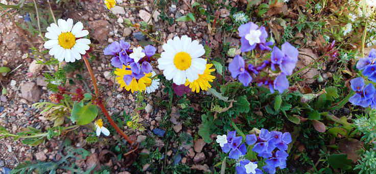 Flower, Flowers, Spring, Nature, Plants, Leaves, Forest