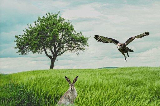 Rabbit, Danger, Prey, Owl, Hare, Wildlife, Hunting