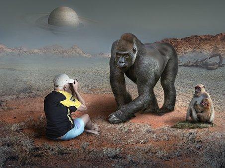 Photographer, Gorilla, Planet, Fantasy, Surreal