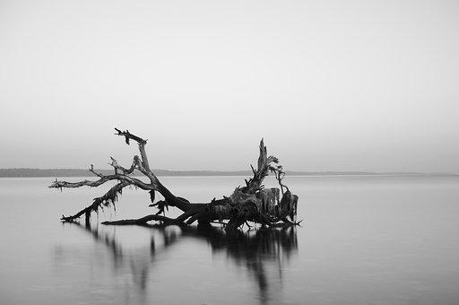 Reflection, Dead Tree, River, Lake, Dusk, Mirroring