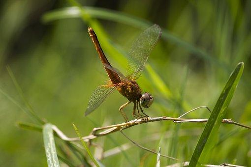 Dragon Fly, Dragonfly On Leaf, Single Dragonfly, Fly