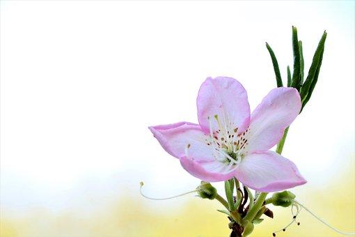Flower, Bloom, Blooming, Flora, Nature, Spring, Summer
