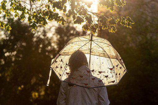 Umbrella, Sunlight, Woman, Rain, Light, Girl, Branch