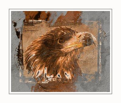 White Tailed Eagle, Eagle, Bird, Head, Beak, Bill