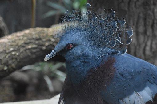 Peacock, Bird, Exotic, Tropical, Animal, Wildlife, Blue
