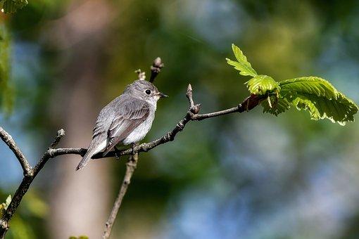 Animal, Bird