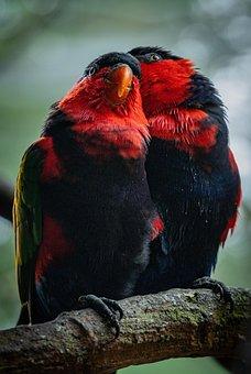 Love Birds, Love, Together, Birds