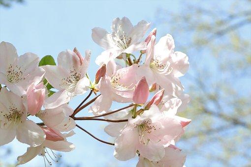 Flowers, Bloom, Flower, Blooming, Spring, Nature, Flora