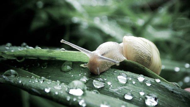 Dew, Plants, Drop Of Water, Dewdrop, Raindrop