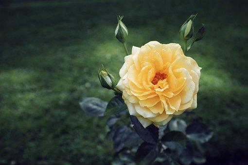 Flower, Bloom, Blossom, Spring, Plant, Flora, Floral