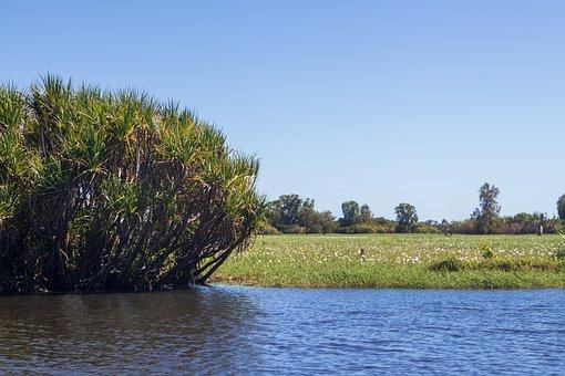 Swamp, Tropical, Bloom, Flower, Tree, Water, River