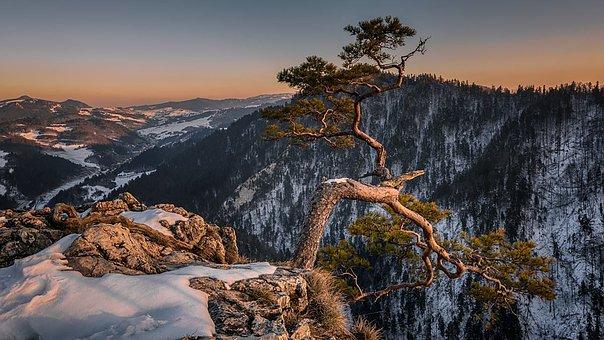 Landscape, Snow, Tree, Mountains, Nature