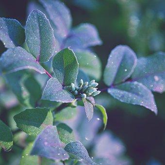 Oregon Grape, Nature, Flora, Morning, Autumn, Fall