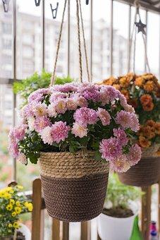Flower, Balcony, Balcony Plants, Flowers, Pots, Garden