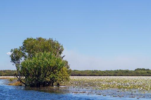 Swamp, Tropical, Bloom, Bird, Flower, Tree, Water