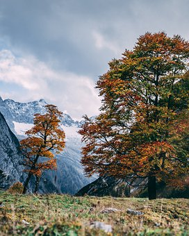 Meadow, Trees, Mountains, Autumn, Fall, Field