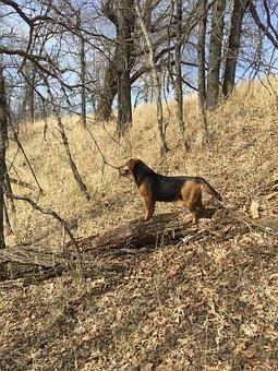 Dog, Woodlands, Forest, Nature, Outdoors, Woodland