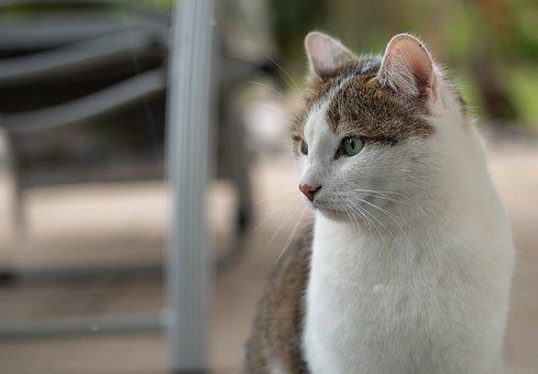 Cat, Balcony, Portrait, White, Brown