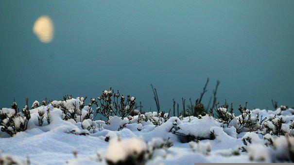 Winter, The Nature Of The, Snow, Cold, Frost