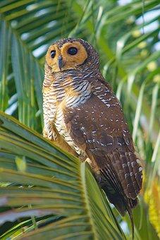 Owl, Bird, Branch, Perched, Animal, Bird Of Prey