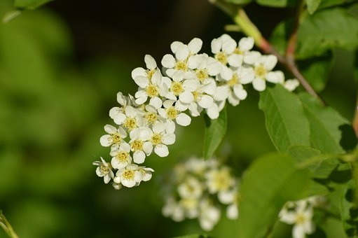 Flowers, Leaves, Buds, Plant, Foliage, Grass, Spring