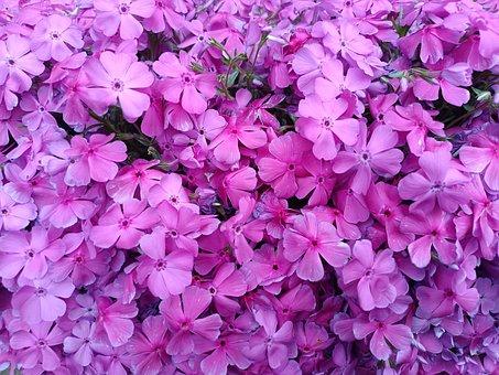 Plant, Nature, Flower, Flora, Blossom