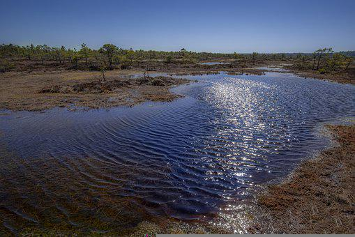 Swamp, Bog, Grass, Sand, Trees, Spring, Water, Outdoors