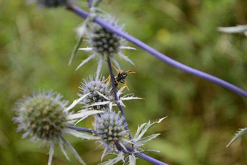 Nature, Flowers, Insects, Barb, Wasp, Meadow