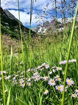 Parkland, Colorado, Mountain, Flowers, Outdoors, Nature