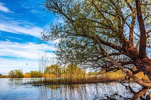 Havel, Nature, Water, Brandenburg, Landscape, Idyllic