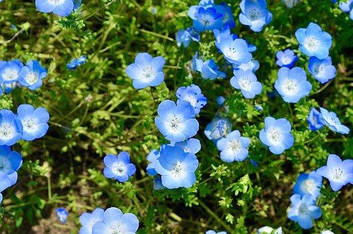 Striking, Japan, Blue Eyes, Blue Flower, Mailbox, Fir