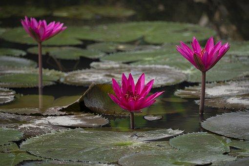 Background, Beautiful, Beauty, Bloom, Blossom, Botany