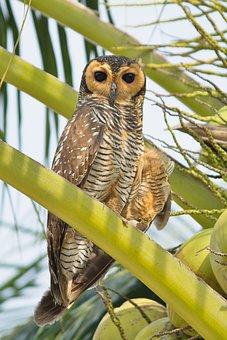 Bird, Owl, Nature, Animal, Wildlife, Predator, Feather