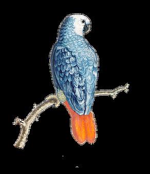 Bird, Parrot, African Grey Parrot, Congo Grey Parrot
