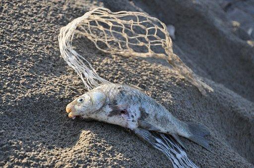 Disaster, Pollution, Plastic, Environmental, Danger
