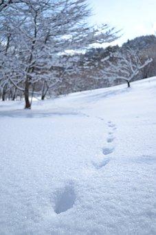 Snow Scene, Winter, Snow, Mountain, Winter Landscape