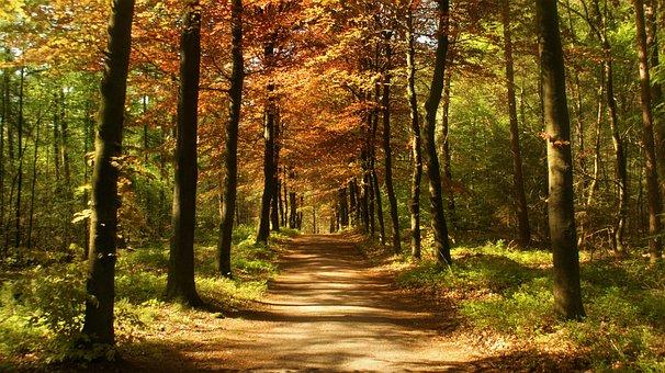 Beech Avenue, Forest, Trees, Path, Trail, Avenue, Beech