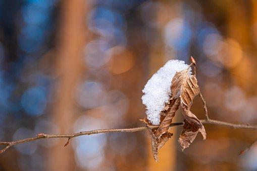 Snow, Dried Leaf, Twig, Branch, Ice, Frost, Winter