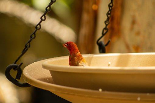 Red, Bird, Eating, Nature, Wildlife, Exotic, Sun, Beak