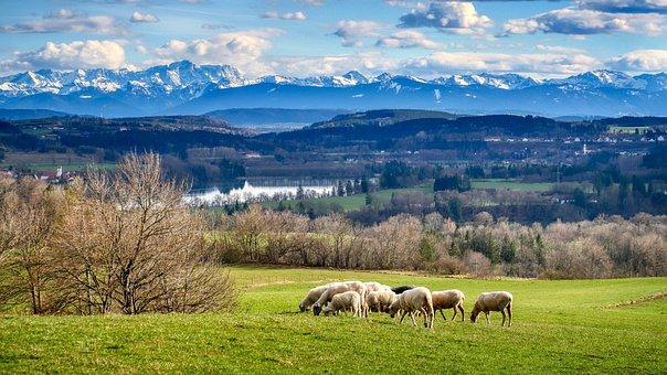 Sheep, Field, Mountains, Panorama, Pasture, Meadow