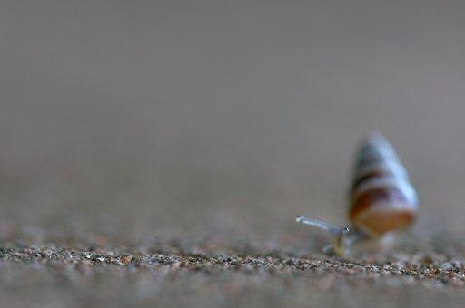 Bokeh, Snail, Nature, Macro, Invertebrates