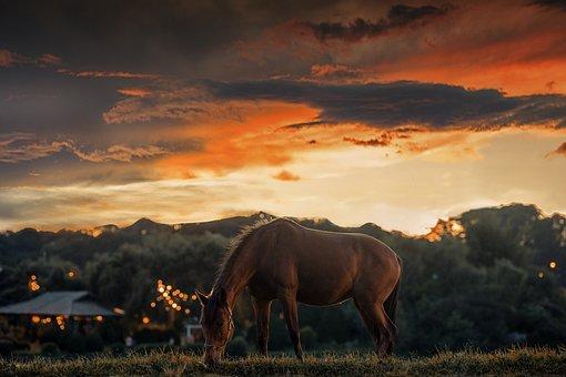 Sunset, Horse, Meadow, Grazing, Grass, Animal, Mammal