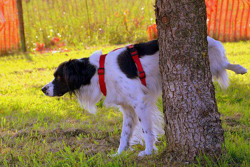 Dog, Pee-pee, Tree, Prato, Nature, Animal