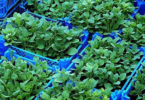 Seedlings, Plants, Nursery, Raising, Growing, Bins