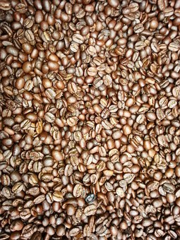 Coffee Beans, Fresh Coffee, Tanzania, Africa, Farming
