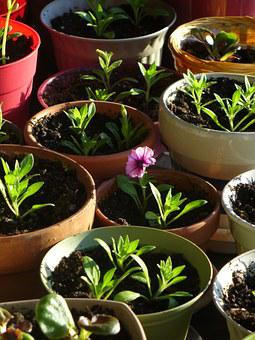 Pot, Seedling, Flower, Gardening, Growing, Cultivate