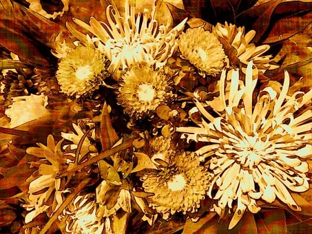 Flowers, Floral, Blossom, Petal, Bright, Bloom, Flora
